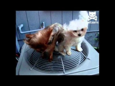 Adorable Puppies get a Blow Dry