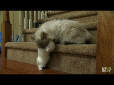Mom to the Rescue – Too Cute!