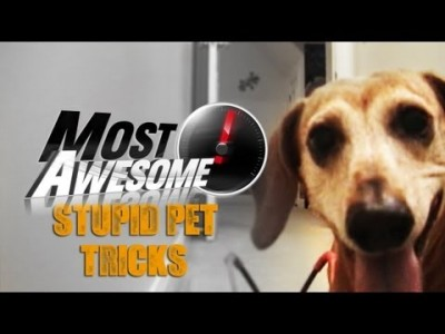 Most Awesome Stupid Pet Tricks