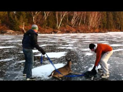 Two Guys Rescue a Deer Stuck on Ice!