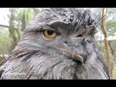 The Owl is not Impressed