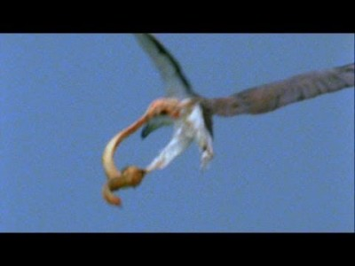 World's Deadliest: Eagle vs. Toxic Snake