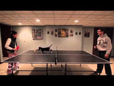 The Ping Pong Cat