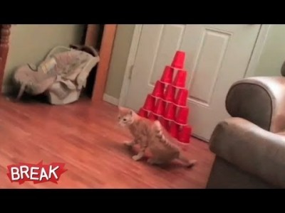 Laser Cat Bowling