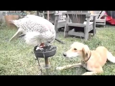Bird Feeding a Dog