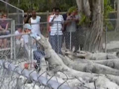 Zookeeper gets almost Killed by an Alligator