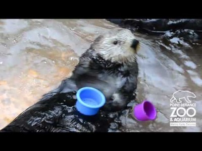 Sea Otter Stacks Cups