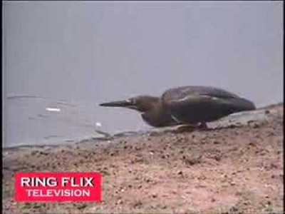 Clever Bird Goes Fishing