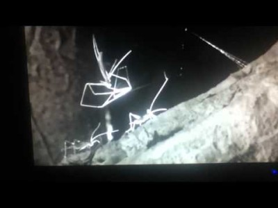 Absolutely amazing Net Casting Spider!
