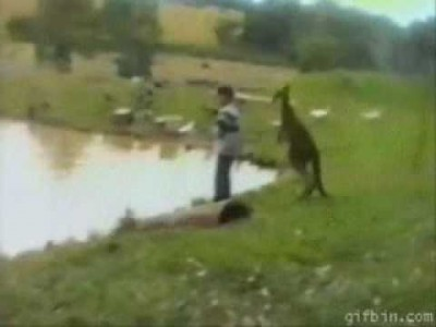 Kangaroo Kicks Kid Into the River – Hilarious!