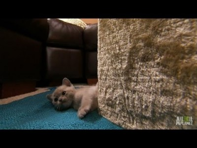 What's That Noise? | Too Cute!
