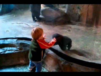 Don't Play with these Humans, says Mother Gorilla!
