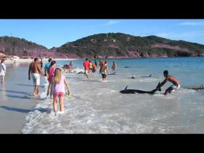 30 Stranded Dolphins on the Shore saved