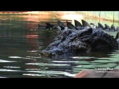 World's Largest Crocodile in Captivity!