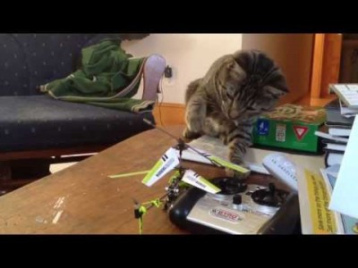 Smitty the Cat and a Helicopter