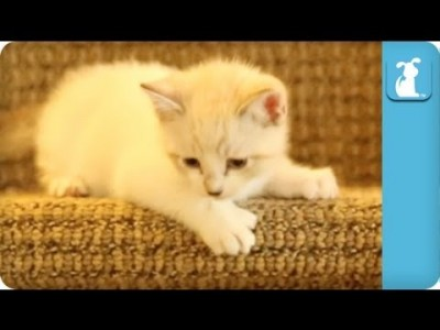 Kitty Doesn't Want to Go Downstairs – Kitten Love