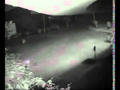 Shocking Footage – CCTV captured Tiger attacking Dog in Dehradun, India