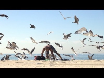 Crazy Bird Prank