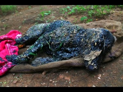 Covered in Tar & unable to Move, this Amazing Rescue saved this Dog's Life