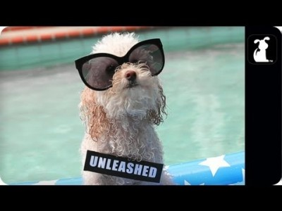 Miley Cyrus – We Can't Stop (PARODY) – Maltey Cyrus – We Can Bark