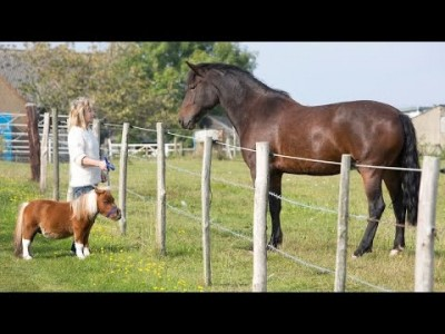 Tiny Horse: Cute Steed suffers from Dwarfism
