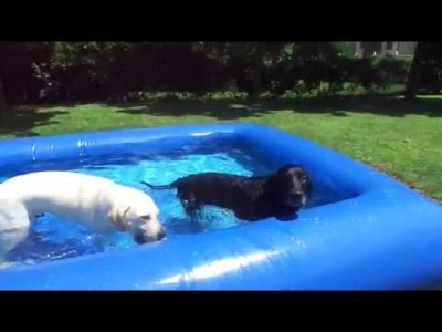 My Dogs staying COOL in their Doggie Pool!