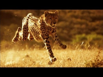 You Can't Outrun a Cheetah