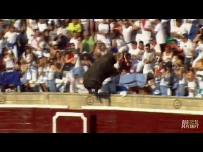 Enraged Bull Leaps into Stands | World's Scariest Animal Attacks