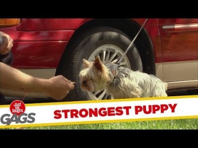 Strongest Puppy in the World Prank