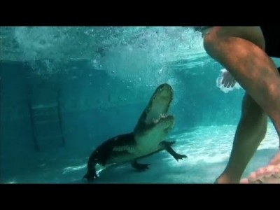 Unwelcome Alligator takes a Dip in Family Pool