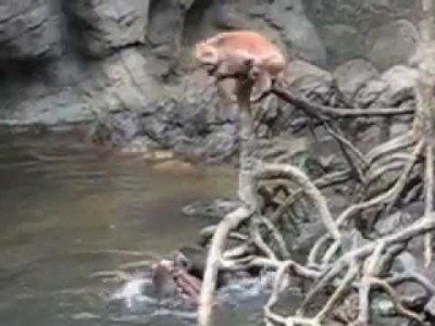 Sea Otters Kill a Monkey at the Bronx Zoo