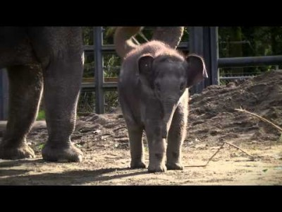 Lily the Baby Elephant at Two Months