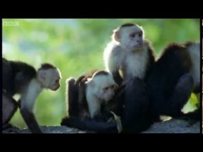 Monkey Insect Repellent – The Life of Mammals