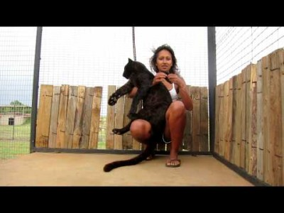 Playing with Pardus the Black Leopard