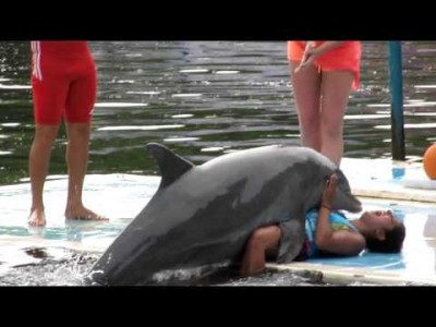 Dolphin Humps a Woman!
