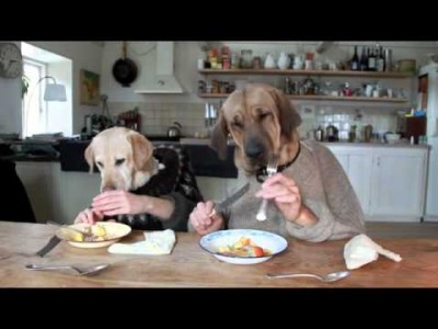 Two Dogs Dining in a Busy Restaurant!