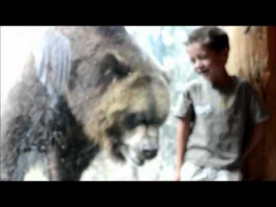 Bear tries to attack Kid through Glass at Colorado Springs Zoo