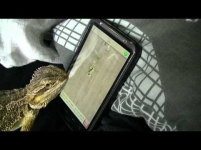 A Lizard plays the 'Ant Crusher' Phone Videogame!