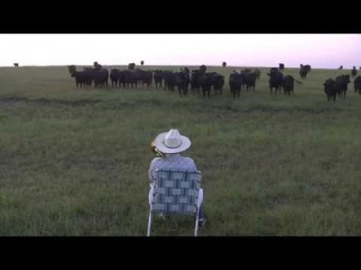Serenading the Cattle with my Trombone