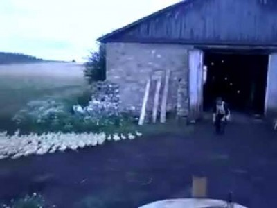 Russian Man orders Ducks to Attention, Marches them into Barn