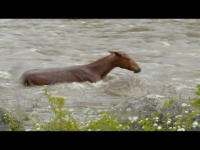 Horse Saved from Raging River after Two Hour Battle with Current