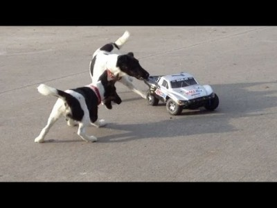 Dogs Attacking RC Car