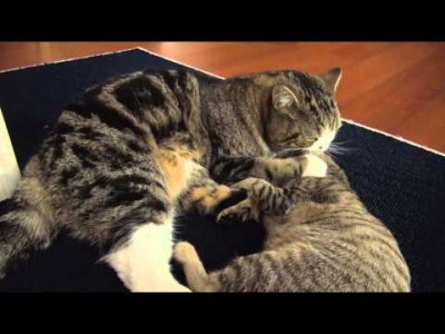 Battle Play of Maru and Hana