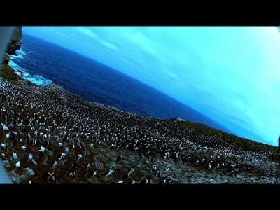 Bird steals Egg Camera & films Penguin Colony from the Air