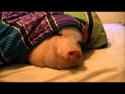 Sneaking a Cookie under Sleeping Pig's Nose