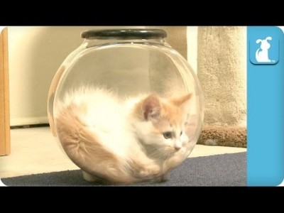 Kitten can't get out of Fishbowl – Kitten Love