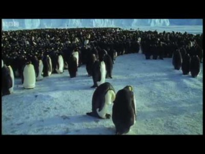 Emperor Penguins – The Greatest Wildlife Show on Earth – BBC