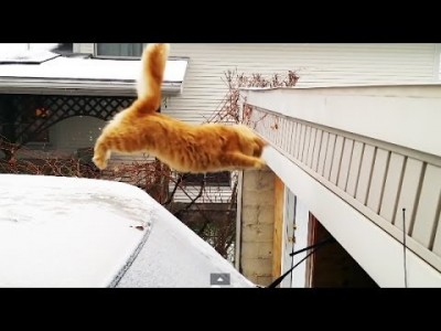 Cat Fail Jump from Snow-Covered Car