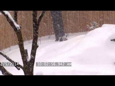 Giant Panda Enjoys Epic Snow Fall