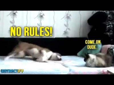 Animals who need to work on their Manners
